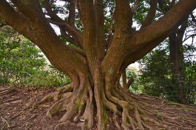 20170304_07_tree