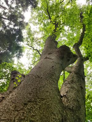 20170611_08_tree